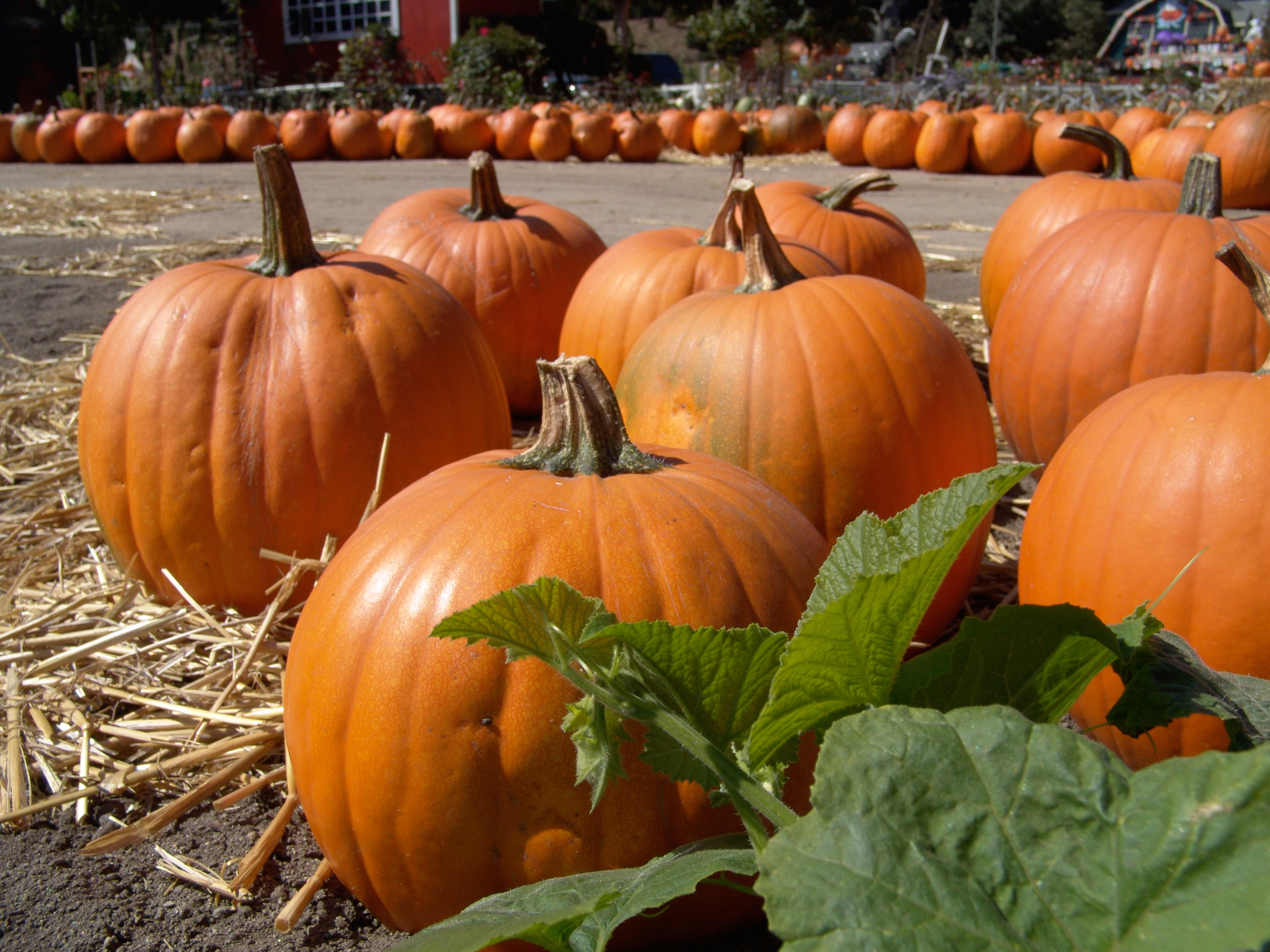 Elderly Care in Cherry Hill NJ: Nutrients and Health Benefits of Pumpkin